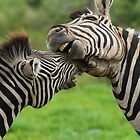 Horsing around by Explorations Africa Dan MacKenzie