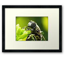 Bee Mimic 1  Framed Print