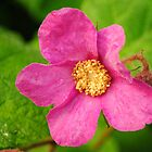 Flowering Raspberry by goddarb