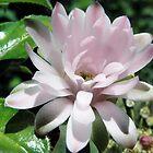 Gymnocalycium mihanovichii sp Cactus Flower by Linda Gleisser