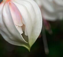 Pristine fuchsia by Celeste Mookherjee