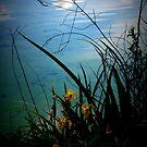 Reflection of Heaven by Barbara Gerstner
