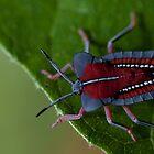 Stink bug. by Stephen Brown