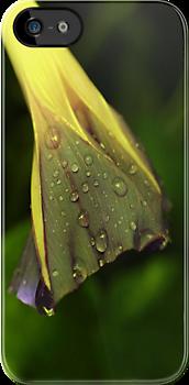 Rain Among the Morning Glories by aprilann