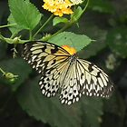 A Flutterby by MyPixx