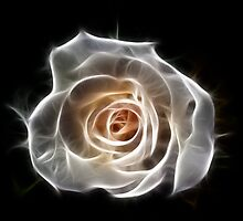 Rose of Light by Bel Menpes