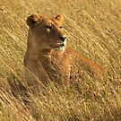 Lioness, Serengeti by Michal Cerny