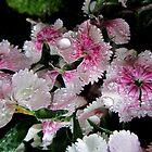 Raindrops in PINK & WHITE  by Vanessa  Warren