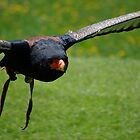 BATELEUR EAGLE by marjack