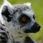 RING TAILED LEMUR by marjack