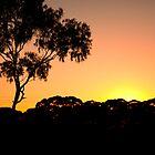 Dawn Breaking by Toucan79