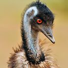 Emu Taken at Macquarie Marshes in NSW by Alwyn Simple