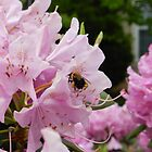 busy bee by Phototeen