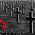 Red Roses for the Fallen by cclaude