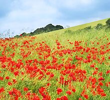 Field of Poppies by Natalie Kinnear