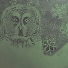 Winter owl by Hannah Clair Phillips