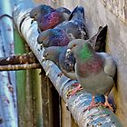 Pigeons on the Edge by sedge808