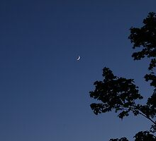 Fingernail Moon by Lisa Carroll