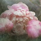 Peonies and Lace by Carol Bleasdale