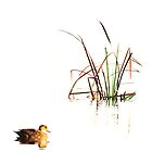 reeds and duck by nadine henley