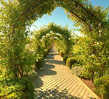The Rose Arbor by Elaine Teague