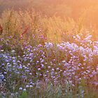 Softness Is  Beautiful  (Wild Flowers) by Linda Miller Gesualdo