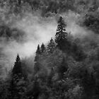Autumn mist on the forest by Patrick Morand