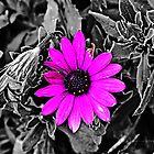 Purple on black by bluetaipan