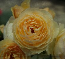 Textured Rose - JUSTART © by JUSTART