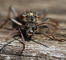 Isle of Mull Insect by photobymdavey