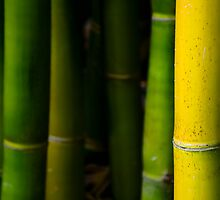 Bamboo by jswolfphoto