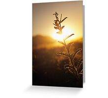 Prickly Sunset Greeting Card