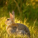 Bunnies And Bokeh by John  De Bord Photography