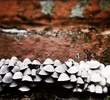 Mushroom City by foofighters69