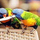 """Lorikeets"" by Michelle Lee Willsmore"