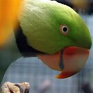 Green Parrot. by MrDtct