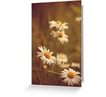 Vintage Daisies Greeting Card
