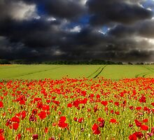 Poppy Time by timpr