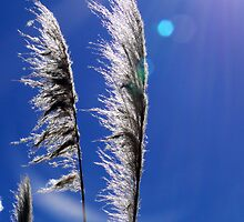 Pampas Grass II by Al Bourassa