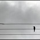 Bird on a wire by MeaganStewart