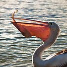 Pelican fishing by Nick  Taylor