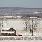 The Fields are White with Snow by Mary-Elizabeth Kadlub