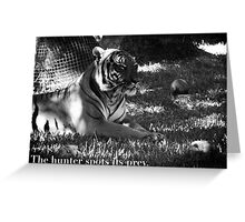 Tiger # 2 Greeting Card