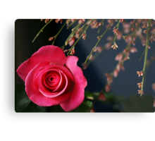 Astounding Blossom ~ Pink Rose Metal Print