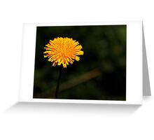 Grow a little sunshine Greeting Card