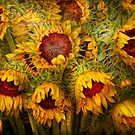 Flowers - Sunflowers - You&#x27;re my only sunshine by Mike  Savad