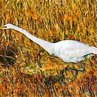 Stalking Great Egret by Lightengr
