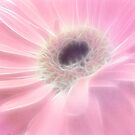 Gerbera in Pink by Fe Messenger