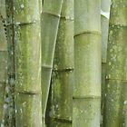 Bamboo by Sandy Edgar