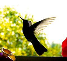 Hummingbird Series 14 by Al Bourassa